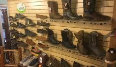 NAOT and Ariat Shows